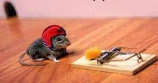 Mouse in helmet